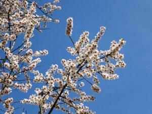 Das Frühjahr blüht am Kalterer See, © Lisa K. Schuermann