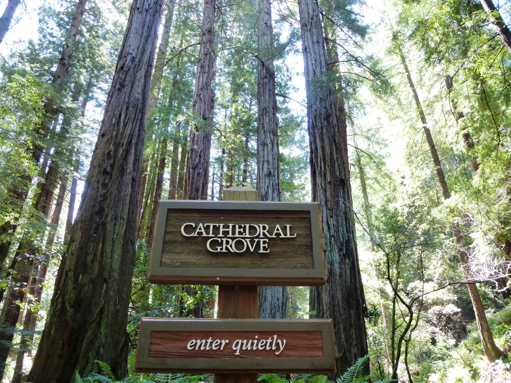 wandern-usa-muir-cathedral-grove-redwoods-coyright-lisa-k-schuermann
